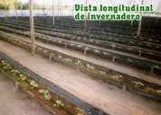 Hidroponia organica ecologica