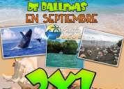 Promocion 2x1 a ladrilleros avistamiento de ballenas