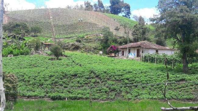 Excelente Finca Agricola en Venta 2.5 Cuadras