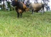 Finca de 6 hectareas en la vereda la cabaña