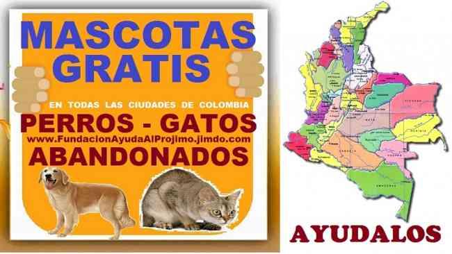 GRATIS, Adopcion Perros, Gatos,  Bogota, Cali, Medellin, Barranquilla, Cartagena, Cucuta,