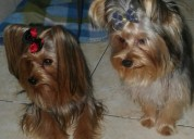 Peluqueria y guarderia canina natalia romero en ibague