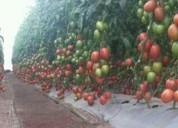 Construccion de invernaderos para cultivos