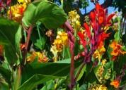 servicio de jardineria y venta de plantas