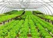 Cultivos hidroponicos organicos