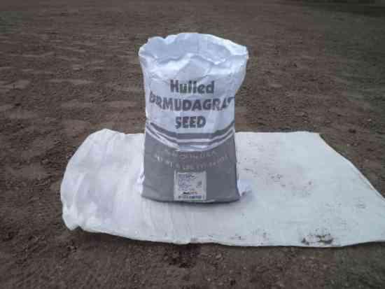 grama natural bermuda grass colombia - consultoria y asesoria personalizada.