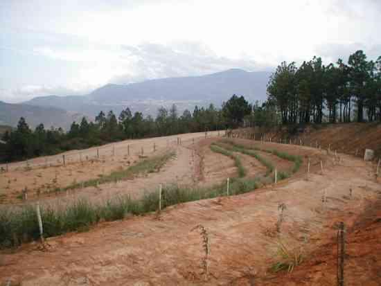 consultorias y servicios agroforestales colombia