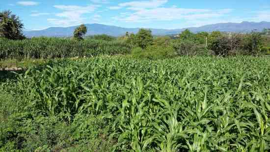 SE VENDE O PERMUTA EXCELENTE FINCA PARA INVERSIONISTAS, NEIVA, HUILA