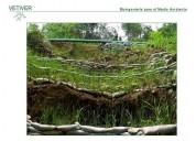 Talud vetiver control erosion suelos asesoria colombia.