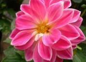 Plantas ornamentales, y todo lo relacionado para el jardìn whatsapp 3202431927