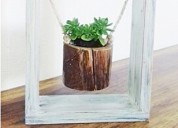 Plantas decorativas suculentas