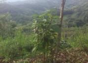 Dirtamente arrendo tierra cultivable stf