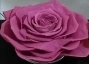 Venta de flores preservadas