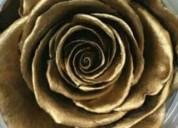 Rosas preservadas para negocio