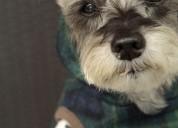 Peluqueria canina a domicilio 20.000