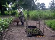 Servicios agroforestales colombia