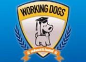 Adiestramiento canino,escuela para perros
