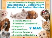 ⭐ palmira, centro veterinario, happy animals, perr