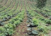 Vendo 5 hectareas casa agua luz via en yaguará