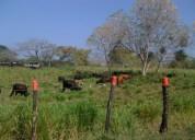 Vendo o permuto finca de 40 hectareas en medellín
