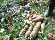Se vende finca buena bonita barata en cunday tres esquinas tolima 18 hectareas plana en cunday