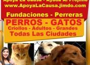 ⭐ gratis, adopta perros y gatos, adopcion, fundaci