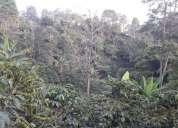 Excelente finca 30 hectares en rovira tolima