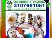 ⭐ veterinario palmira, veterinaria, esterilizacion