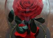 Rosas preservadas premium,florlicol