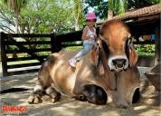 Parque panaca, conectate con los animales