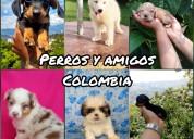Cachorros de varias razas