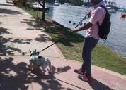 Paseador de perros cartagena