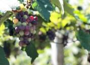 ¡el parque de la uva te espera! ven y disfruta