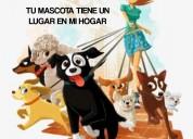 Guardería y hospedaje canino