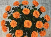 AsesorÍa en preservaciÓn de flores tallos follajes