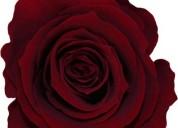 CapacitaciÓn  y/ o asesorÍa en preservaciÓn floral