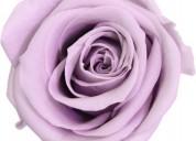 Arreglos florales preservados,nueva fórmula