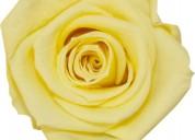 Aspecto fresco de las nuevas flores preservadas