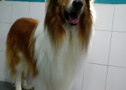 Baño y peluqueria canina