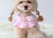 Luxury pets, ropa de lujo para tu mascota