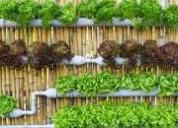 cultivos hidroponicos en casa
