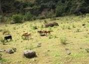 finca en venta tangua ganadera 20 hectarea 20 m2