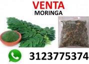 Moringa, el árbol milagro de venta bucaramanga
