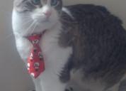 Corbata navideña para gato
