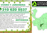 ⭐ jardineros medellin, paisajismo, diseño jardines